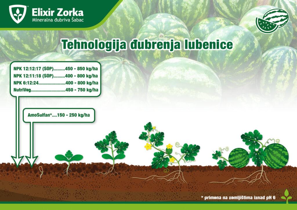 Tehnologija đubrenja lubenice